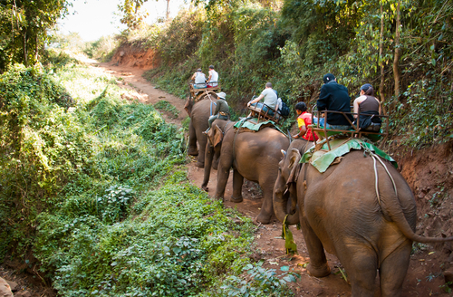 Things to do in Koh Samui - Elephant Trekking