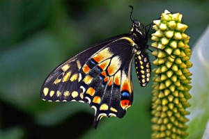 exotic_butterfly_i_by_manu1993-d63ms7s