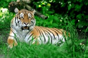 Animal attractions in Koh Samui