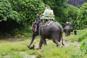 Elephant Tours in Koh Samui