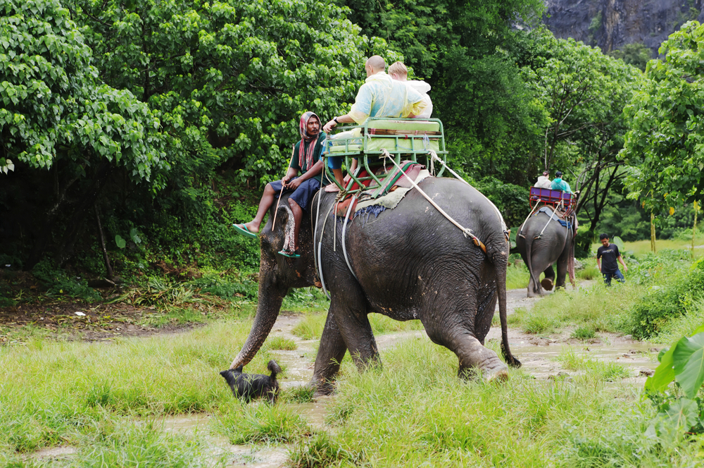 Elephant Tours in Koh Samui